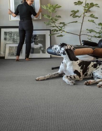 Pet friendly carpet | Gilman Floors